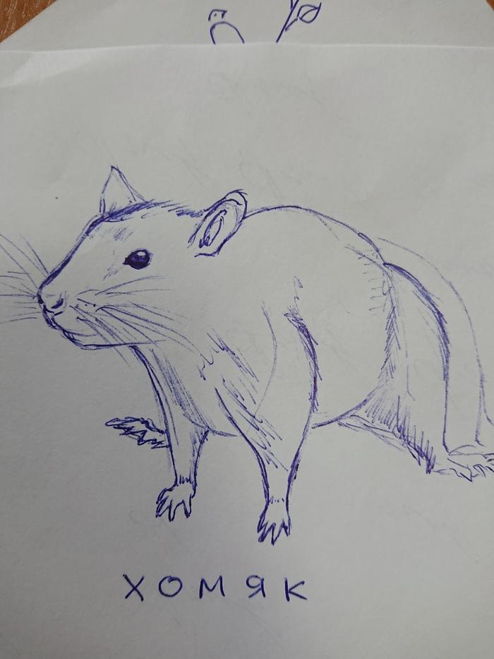 Мое творчество срисовывания Рисунок ручкой, Крыса, Хомяк