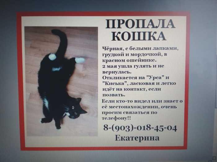 Пропала кошка Кот, Потеря, Помощь, Солнечногорск, Зеленоград, Длиннопост, Потерялся кот, Без рейтинга
