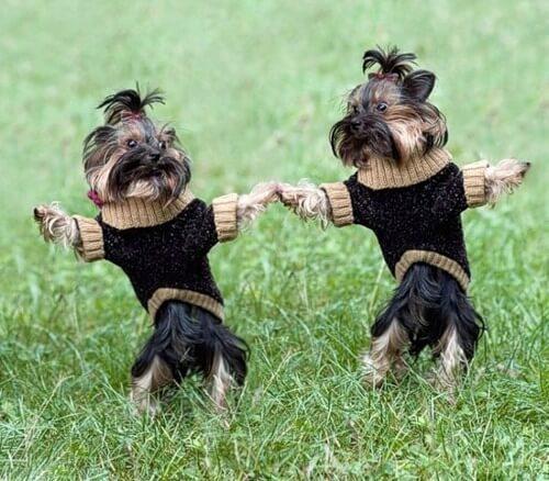 Согласно исследованию, любовь к собакам передается по наследству! Животные, Питомец, Длиннопост, Наследство, Любовь
