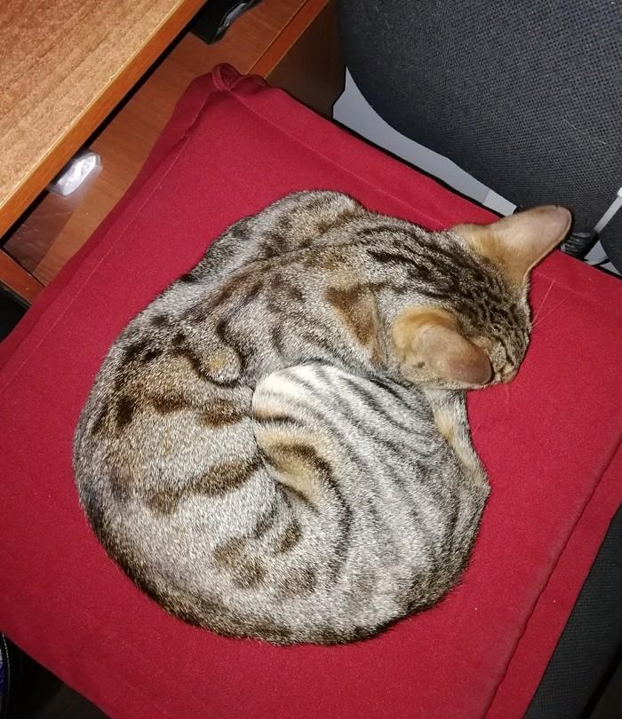 Уличный кот по имени...? Кот, Полосатый, Колесо обозрения, Длиннопост