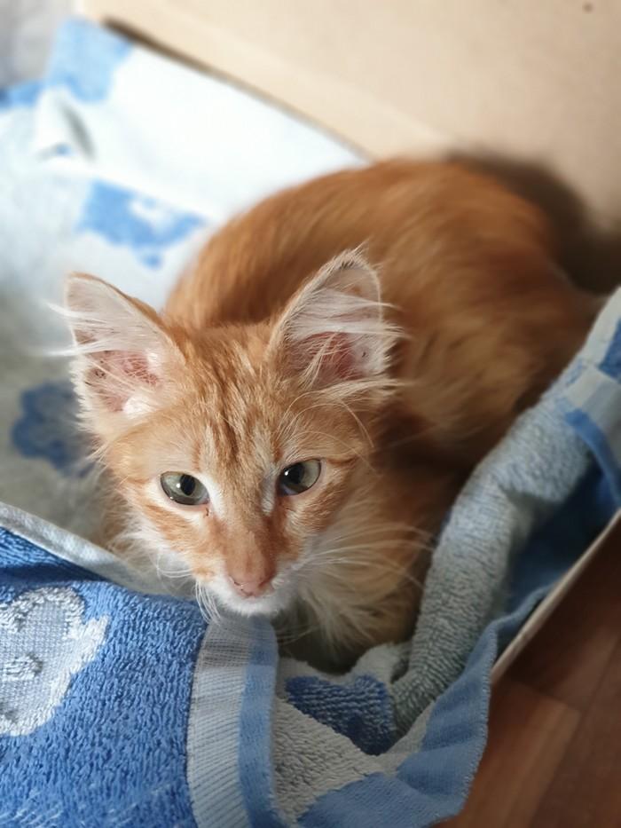 Найден котёнок Кот, Потеряшка, Найден кот, Ищет семью, Москва, Длиннопост