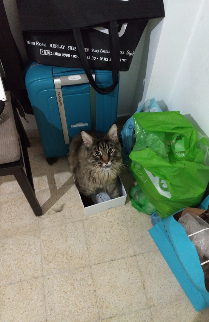 Размер не имеет значение Мейн-Кун, Коробка и кот, Зато не ипотека, Длиннопост, Кот