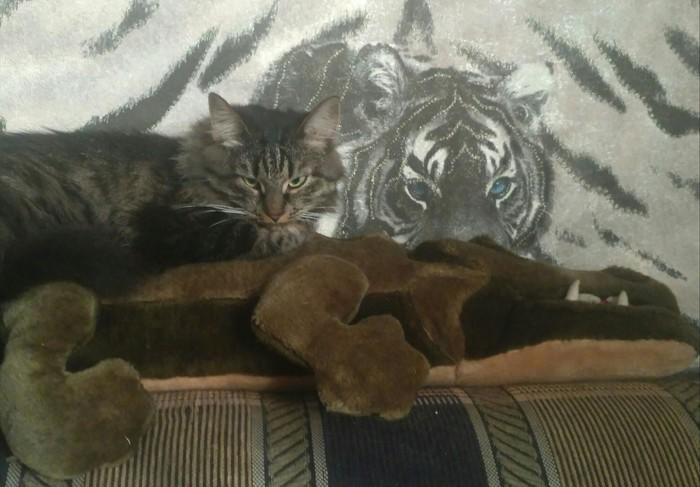 Удачная охота тигра Кузи.