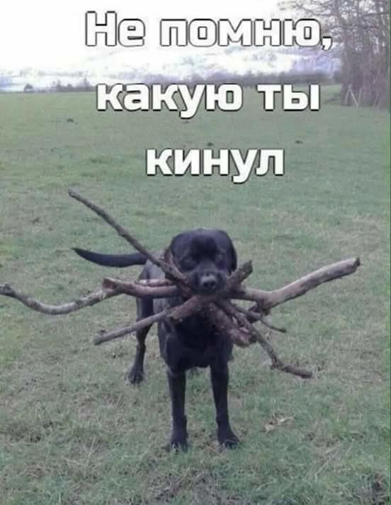 Как чистомен с собакой гуляет