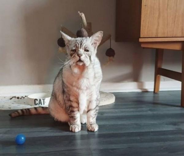 Кот с синдромом Элерса-Данлоса нашел дом вместе с лучшим другом Кот, Синдром Элерса-Данлоса, Длиннопост