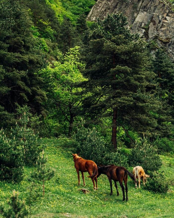 Природа Дагестана Россия, Лес, Природа, Красота природы, Фотография, Красота, Кавказ, Дагестан, Длиннопост