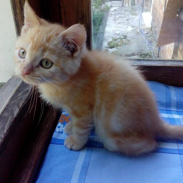 Будущий персик ищет дом Передержка, Котомафия, В добрые руки, Домашние животные, Кот
