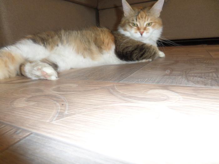 Кошка, мячик и диван. Кот, Домашние животные, Игрушки