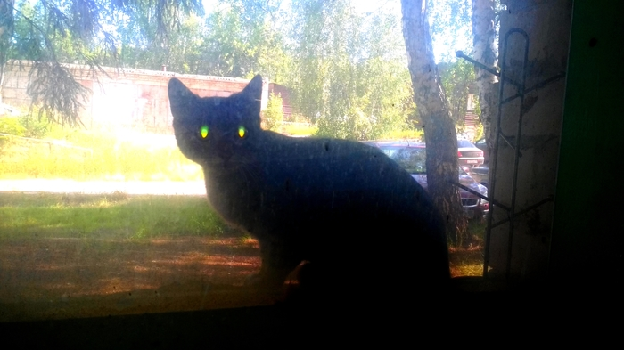КОТО - Установка с лазерным наведением Кот, Глаза