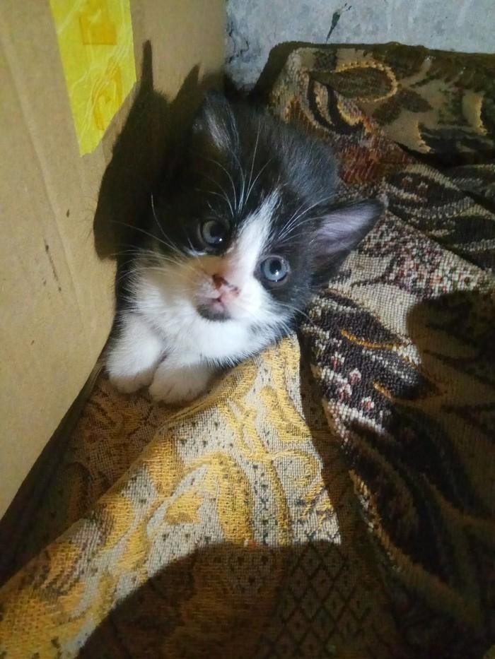 Иваново! Помогите котятам найти дом! [неактуально] Котята, Помощь животным, В добрые руки, Иваново, Длиннопост, Кот, Без рейтинга, Отдам