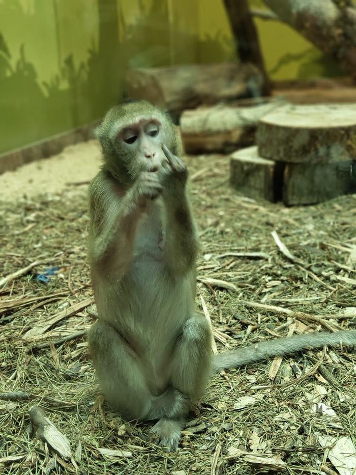 Дружелюбная обезьянка из Белгорода Белгород, Зоопарк, Обезьяна, Фотография, Длиннопост