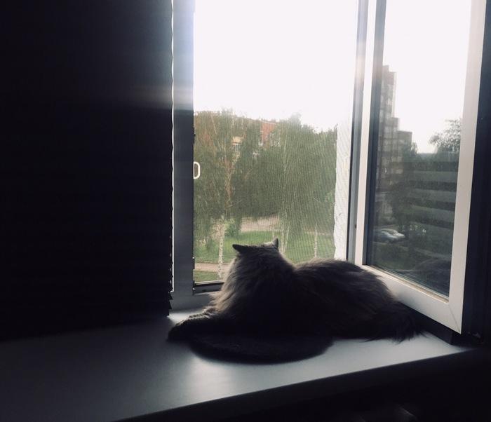 Не мешай Кот, Котомафия, Окно, Взгляд