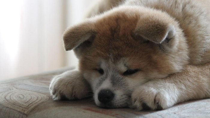 Количество кошек и собак в квартире могут ограничить Собака, Собаки и люди, Инициатива, Госдума, Выгул, Длиннопост