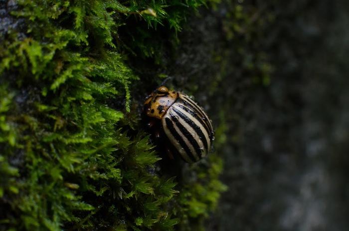 Макро мир Макро, Макросъемка, Насекомые, Фотография, Природа, Длиннопост, Начинающий фотограф
