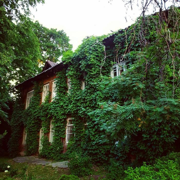 Дом с виноградником Фотография, Дом, Красота