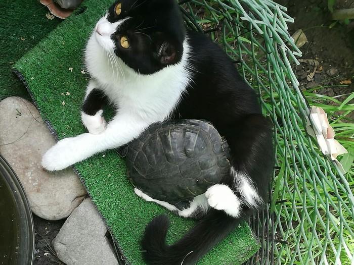 Подруги Кот, Черепаха, Дружба