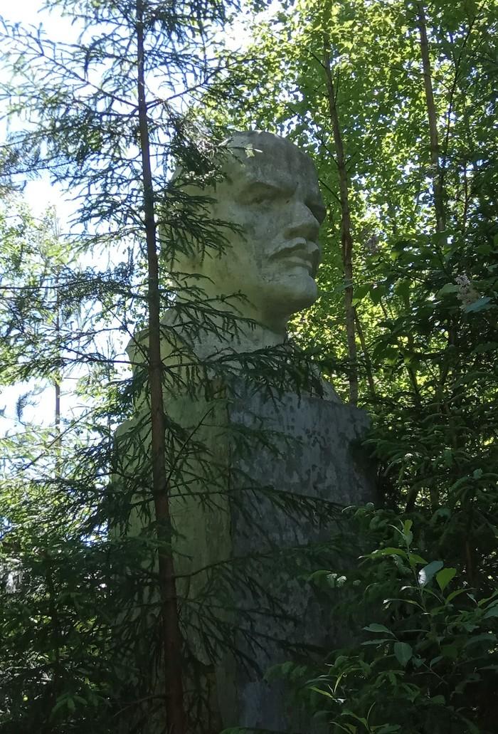 Ленин в лесах. Ленин, Ленинградская область, Лес
