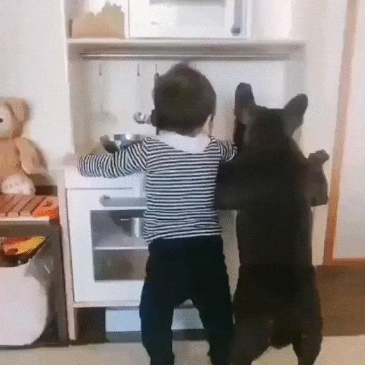 Хозяюшки Собака, Домашние животные, Дети, Мытье посуды, Милота, Французский бульдог, Видео, Гифка