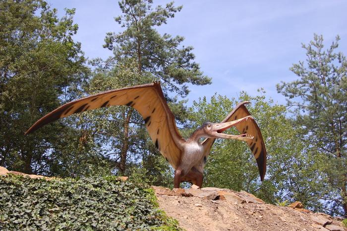 Удивительное открытие ученых: малыши птеродактилей умели летать с рождения Палеонтология, Птеродактиль, Наука, Ученые