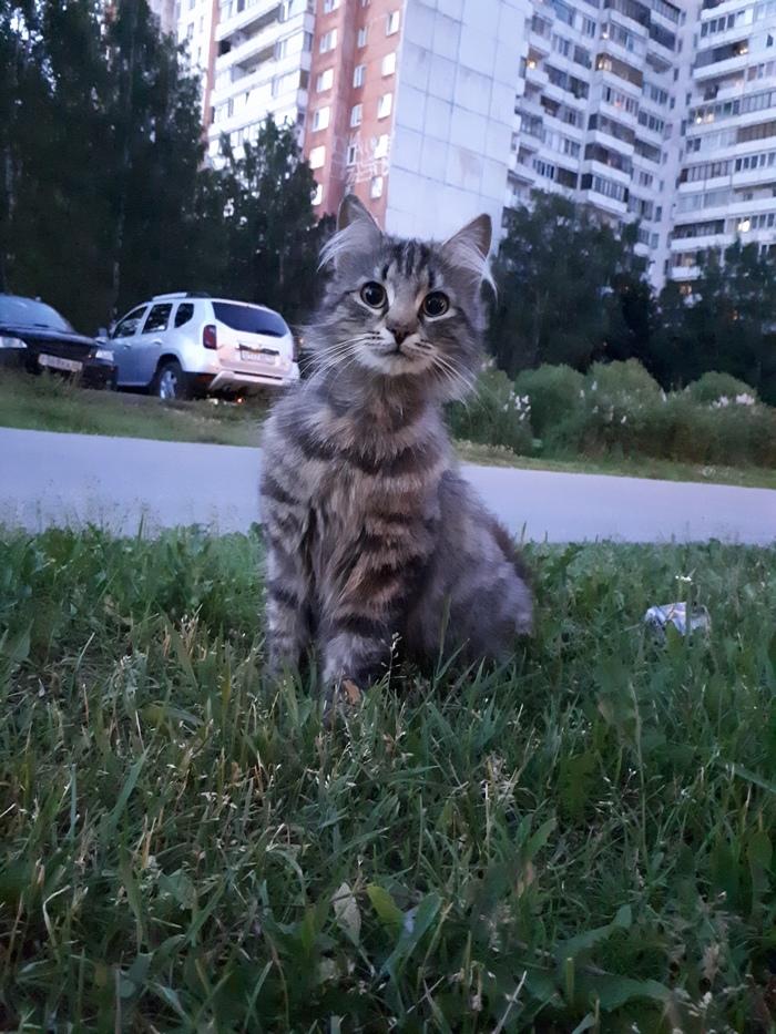 Все еще в ожидании своего Человека Кот, Без рейтинга, Котомафия, Санкт-Петербург, В добрые руки, Ищу хозяина, Помощь животным