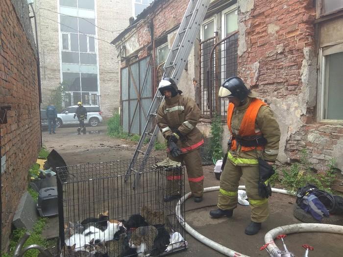 Пожарные спасли из горящего приюта в Петербурге300 кошек и семь собак Санкт-Петербург, Спасение, Пожар, Животные, Кот, Собака, Видео, Длиннопост