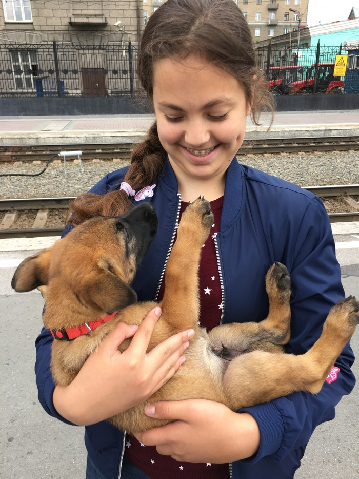 Дружочек несколько подрос Собака, Малинуа, Милота, Домашние животные, Длиннопост