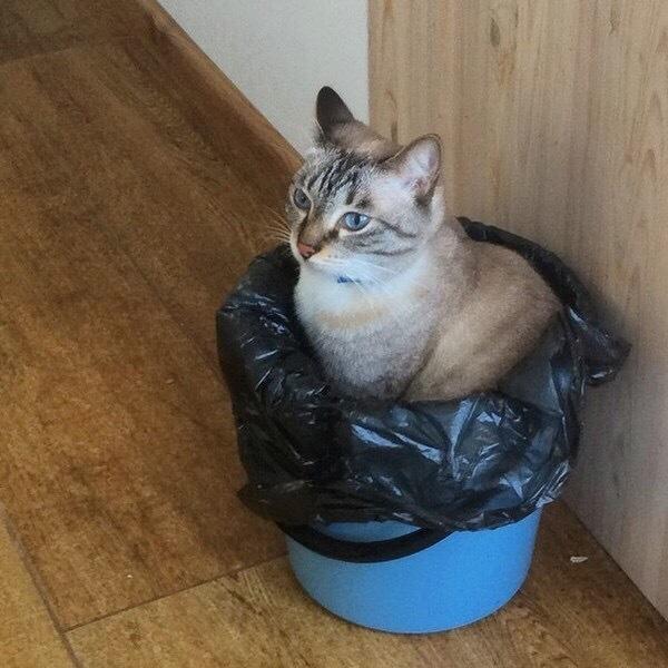 Наконец-то нашёл своё место в жизни.