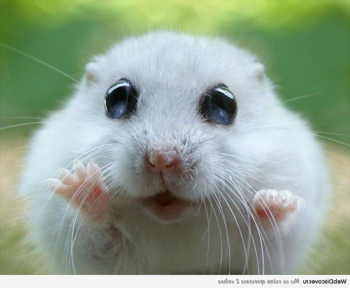 Охота на мышей Зоомагазин, Мышь, Истребление, Девушки, Парни, Длиннопост
