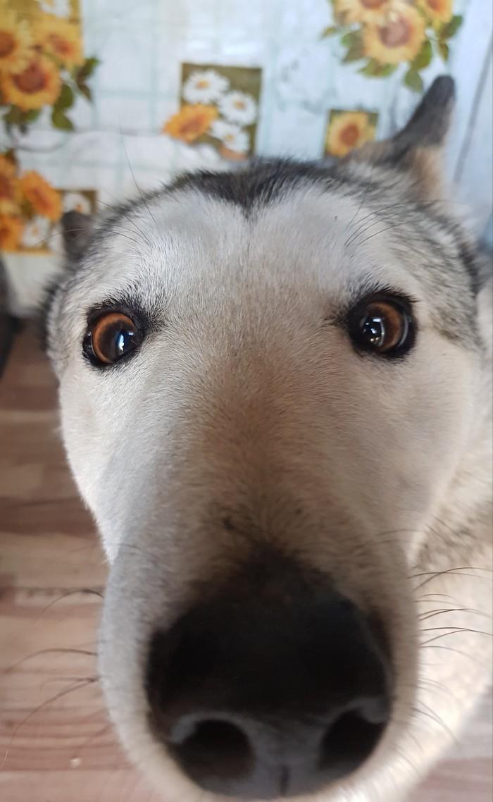 Эти честные глаза говорят, что тапок был только один
