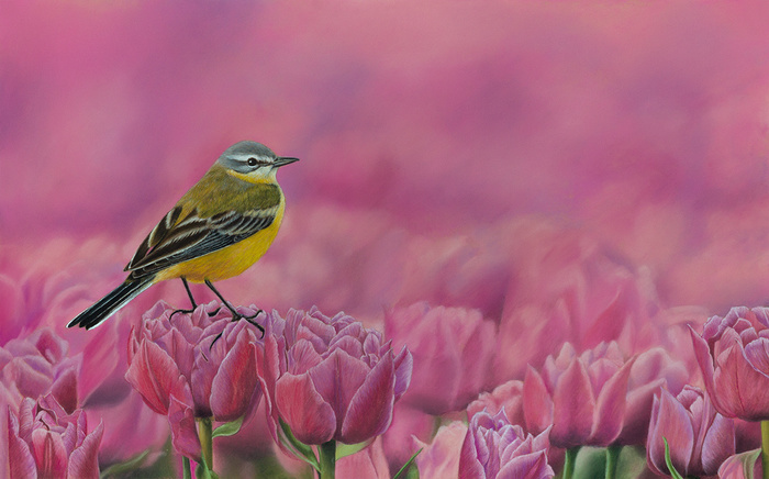 Желтая трясогузка Рисунок, Пастель, Птицы, Тюльпаны, Арт, Фотореализм, Трясогузка, Цветы