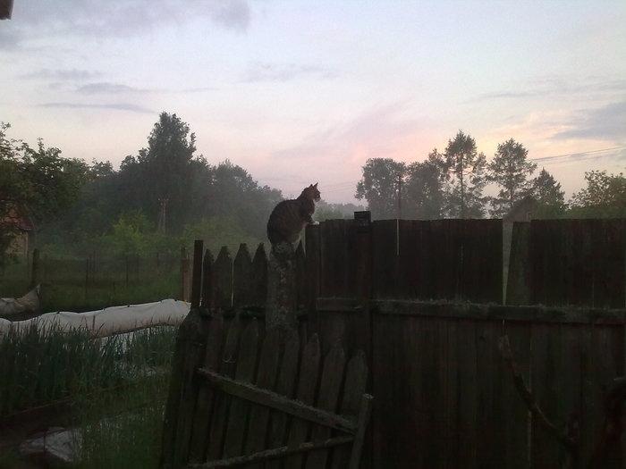 Вечерний дозор Кот, Дозор