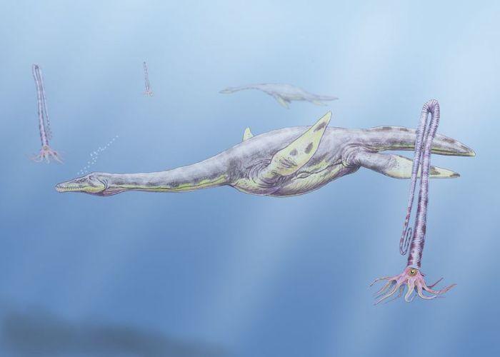 В Антарктиде обнаружили останки 15-тонного эласмозавра — самого тяжелого среди своих сородичей Наука, Палеонтология, Животные, Биология, Открытие, Длиннопост