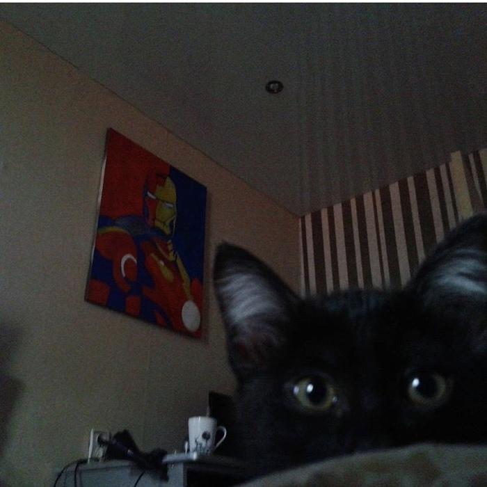 Доброе утро Железный человек, Кот