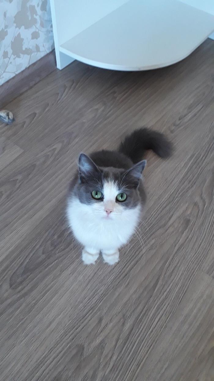 Самара, кошка в добрые руки! В добрые руки, Без рейтинга, Кот, Самара