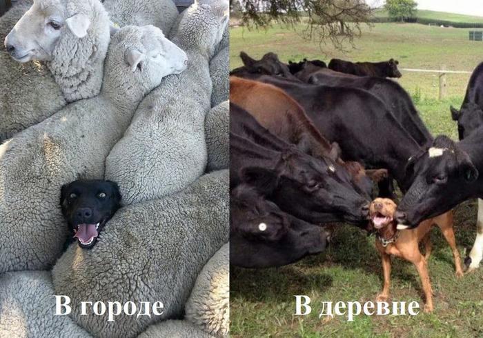 Большая разница.