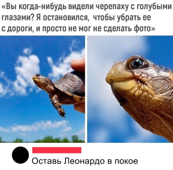 Голубоглазая черепаха