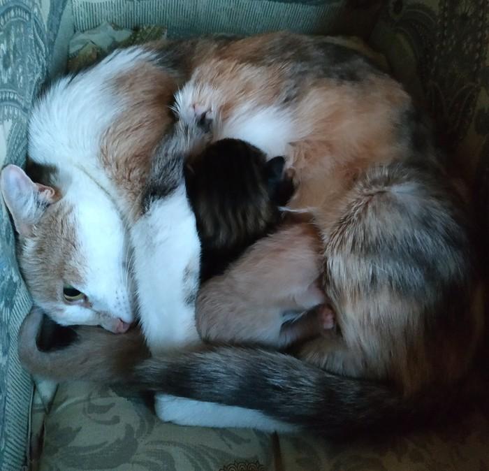 Кошка родила немножко))) Котята, Кот, Милота, Длиннопост