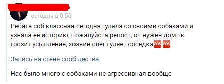 Санкт-Петербург. Доберман Добсон ищет новый дом. Хозяин серьезно заболел. Собака, В добрые руки, Помощь животным, Санкт-Петербург, Без рейтинга, Длиннопост