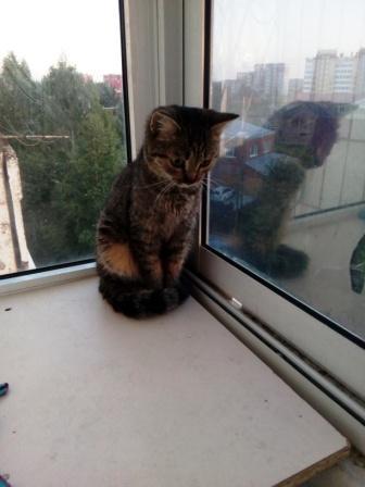 Маленький комочек нежности Кот, В добрые руки, Помощь животным, Найденыш, Длиннопост, Без рейтинга