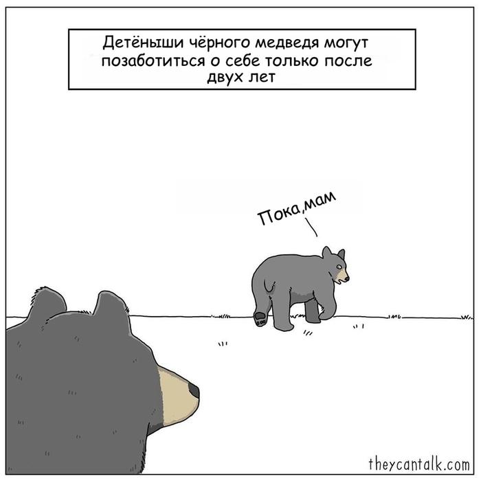 Взросление Pet Foolery, Человек, Гепард, Медведь, Тюлень, Комиксы, Длиннопост