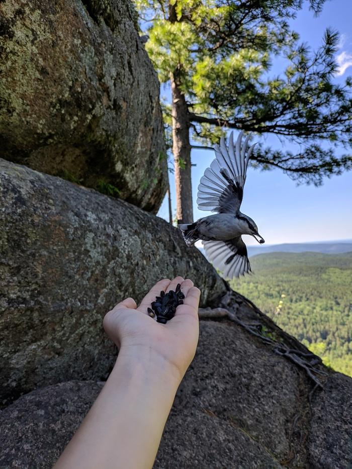 Птица, ешь! Поползень, Красноярские столбы, Фотография, Птицы, Начинающий фотограф