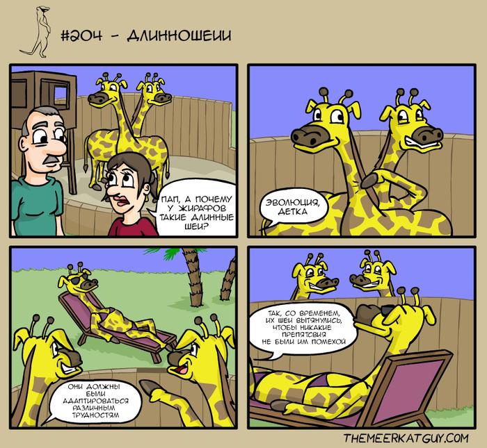 Длинношеии Themeerkatguy, Зоопарк, Жираф, Эволюция, Адаптация, Вопрос