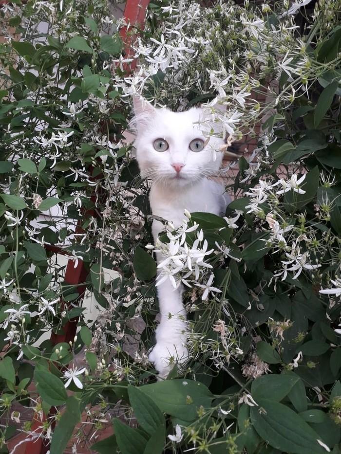 Моя красавица Котомафия, Милота, Природа, Кот