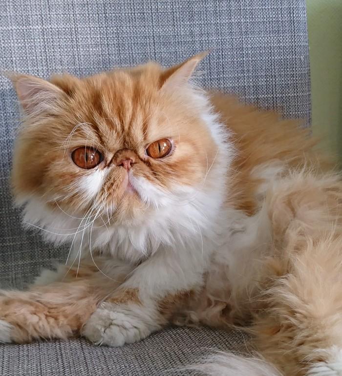 Рыжая морда) Кот, Котомафия, Домашние животные, Домашний любимец