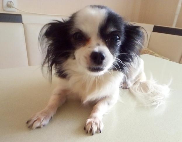 Как у нас появилась собака Лизака Рассказ Авторские истории, Истории, История моей жизни, Собака, Домашние животные, Семья, Дети, Интересное