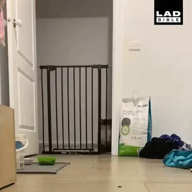 Грация кошки