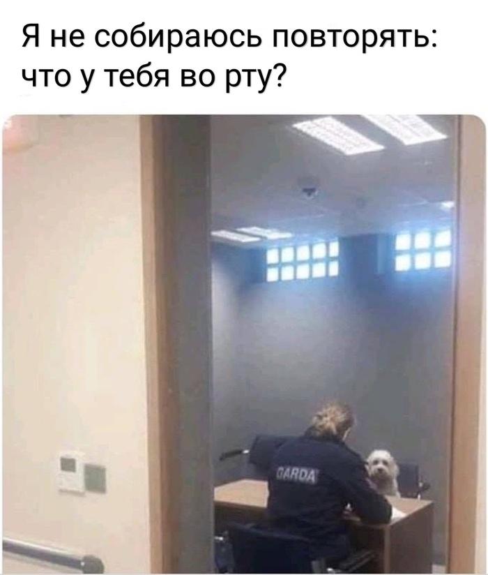 У кого собака - поймёт