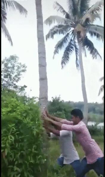 Я твой пальма-труба шатал!