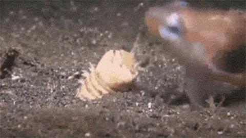 Червячок заморил рыбку Интересное, Червь, Рыба, Гифка