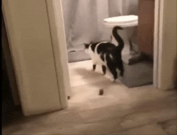 Когда сел погадить, забыв про туалетку